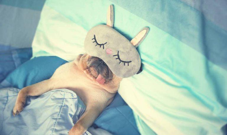 Foto de Benefícios de dormir: saiba qual é a importância e como melhorar a sua