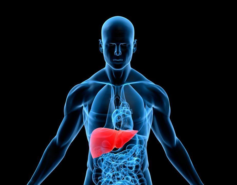 Foto de Proteção hepática - conheça tudo sobre o assunto